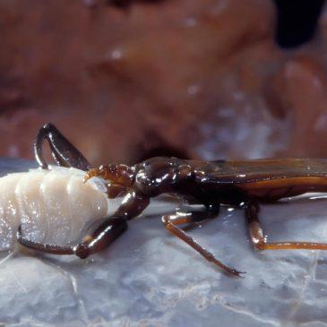 Romanya'nın Zehirli Mağarasında Yaşayan Tuhaf Yaratıklar